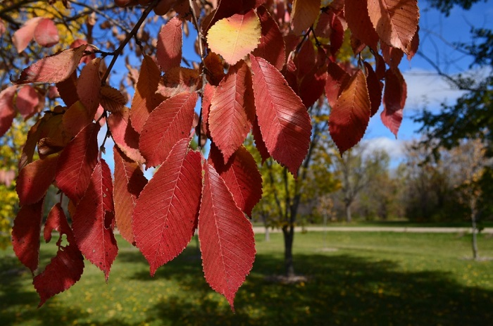 fall leaves closeup